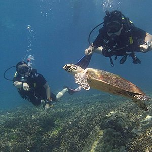 Try dive with us and get to know the underwater world