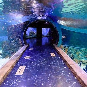 Туннель в морской экспозиции