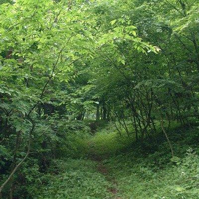 散策コースから脇にそれると森の風情
