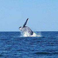Baby whale in Samara