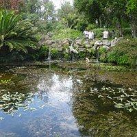 Crocodile Pool Hill Garden