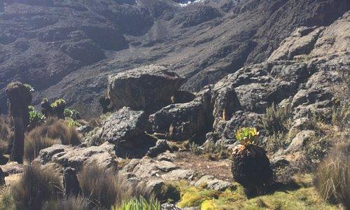 Mt Kenya Landscape