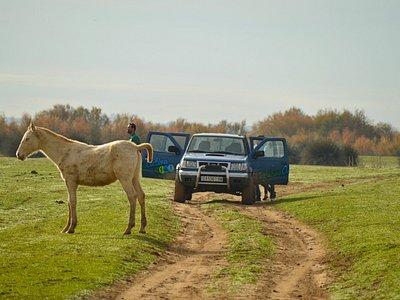 Ruta en todoterreno por Doñana