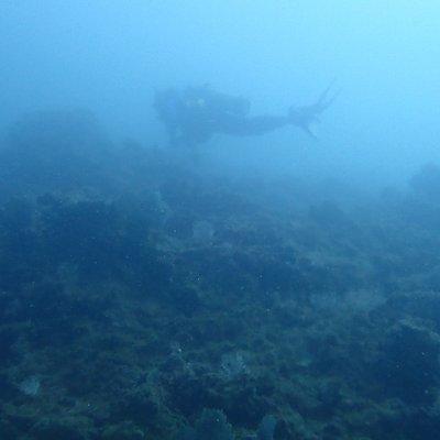 exploring the reef in manuel antonio