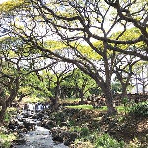 Stream at Garden
