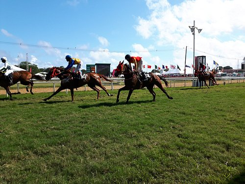 One of the finish, not the Gold cup. We could almost feel the wind from the horses!