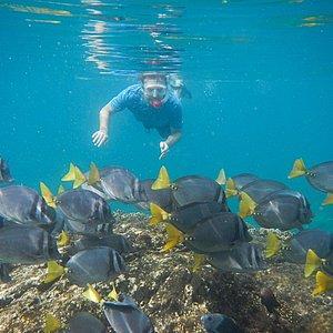 Snorkelling at Coiba