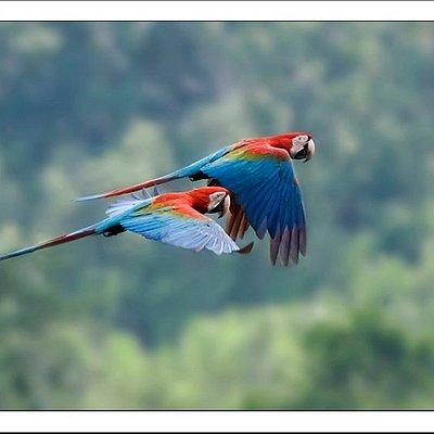 Macaws during an Amazon jungle tour to Madidi National Park