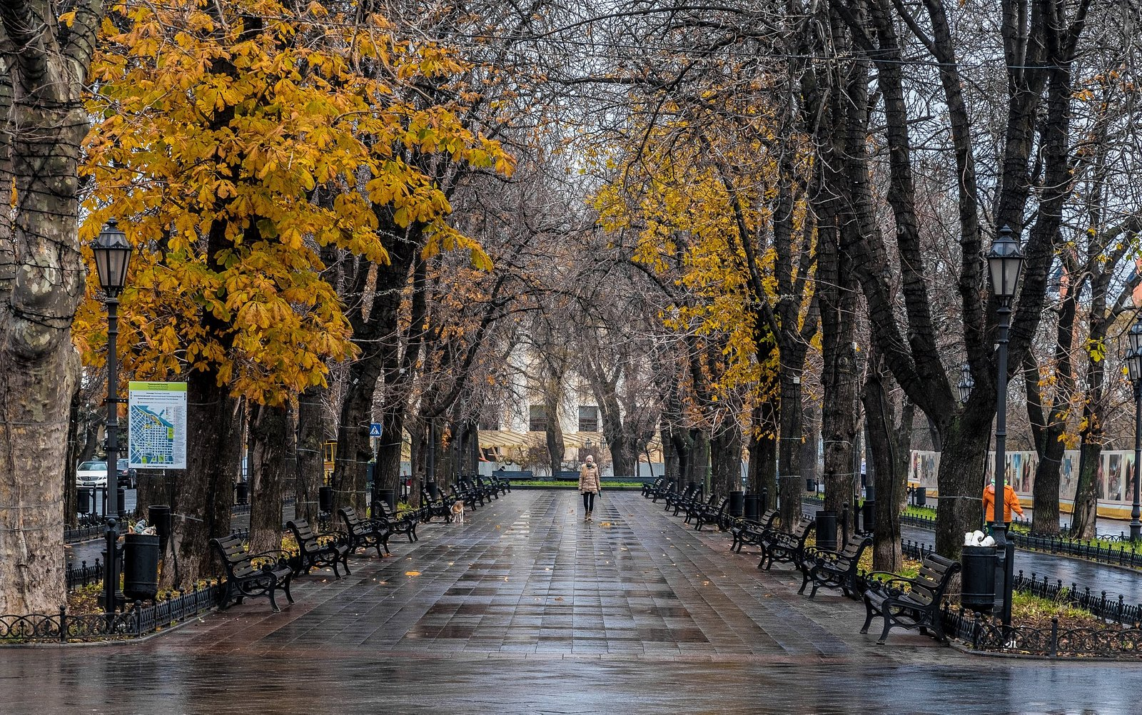 Boulevard View