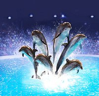 Dubai Dolphinarium brings you one of the most fascinating & unique indoor attractions in the UA