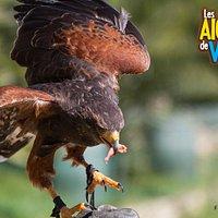 Les Aigles de Valmy