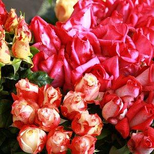roses in season Queens Park farmers market