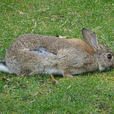 konijn;kinderboerderij Drachten
