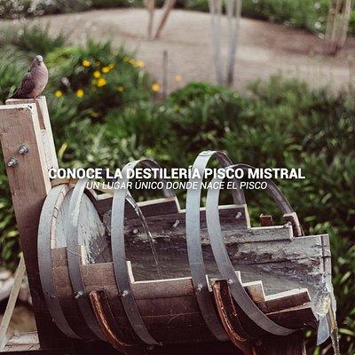 Destilería Pisco Mistral: Un lugar único donde nace el Pisco.