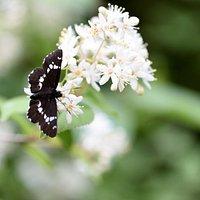 蝶も飛び交っています