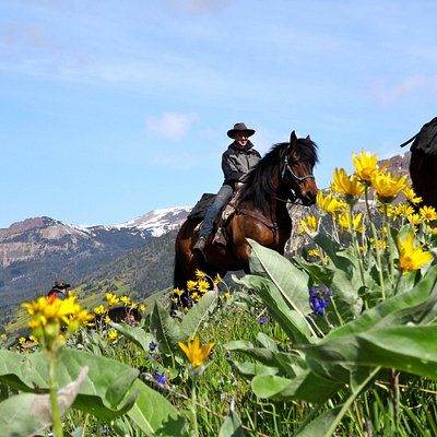 Our horses will get you everywhere safely high up into the BC Wilderness