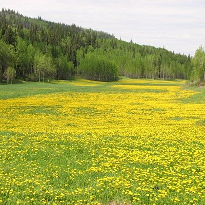 This is the best nature park in Prince George. Stay at The Grateful Bed and you're only minutes