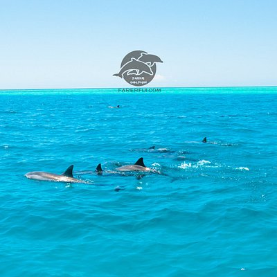 lovely spinner dolphin and beautiful reef