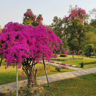 Nydelige farger på mange av trærne. En varm elv renner gjennom hele parken.