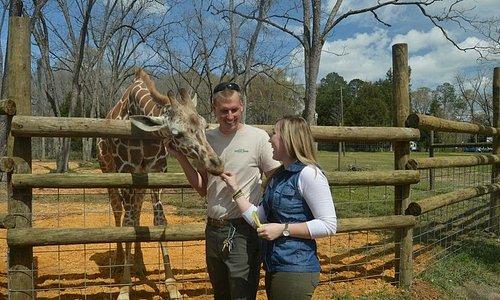 newest giraffe in Alabama