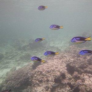 Snorkeling Mnemba