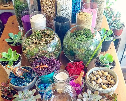 Make Your Own Terrarium anytime.  No green thumb or prior plant experience needed.