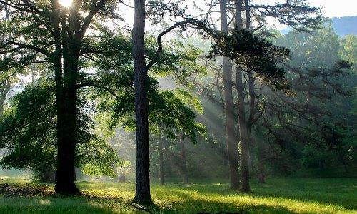 Explore our native pine forest habitat.