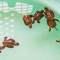 Old Hegg Turtle Sanctuary