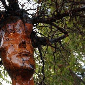 modiliani in tree root