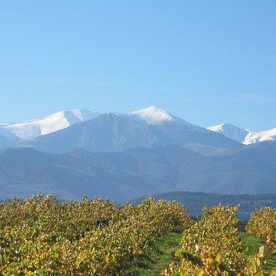 vigne et vue sur le canigou, c'est aussi la photo qui est utilisé sur nos bouteilles de vin