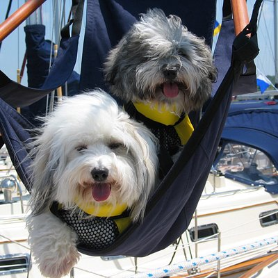 Sailing dogs