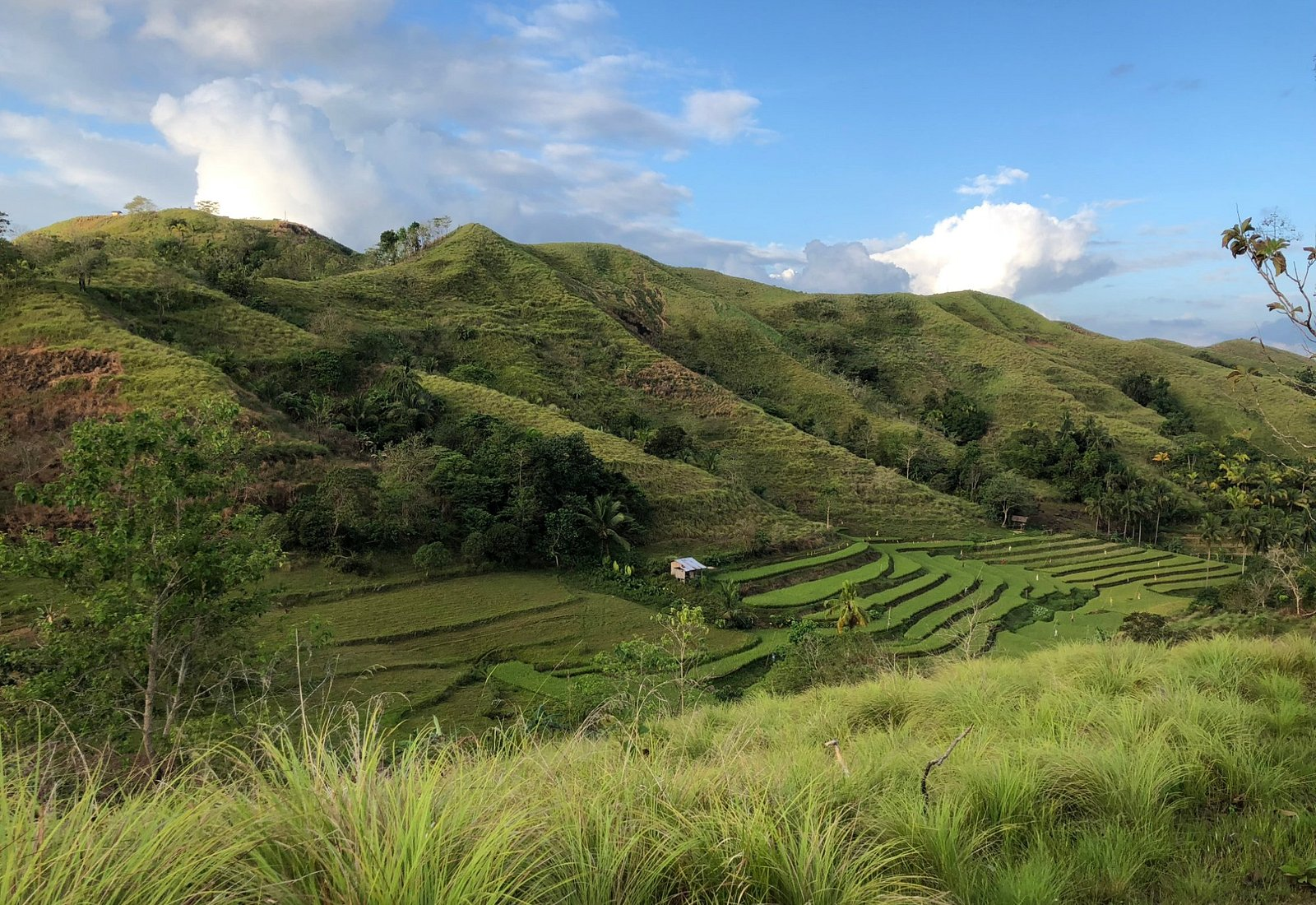 small batch of rice terraces
