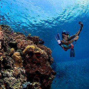 Diving in Timor Leste with Aquatica Dive