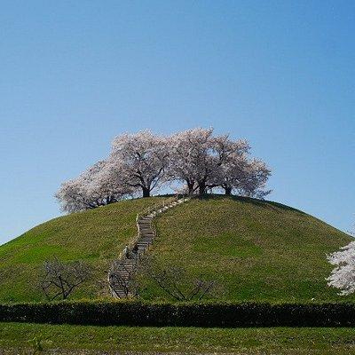 丸墓山古墳:桜が綺麗でした。反対側にも階段があります。頂上からは「忍城」など行田市内が見渡せます。