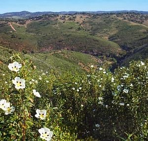 Serra de Portel