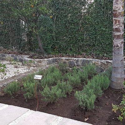 Contamos con un hermoso jardín orgánico