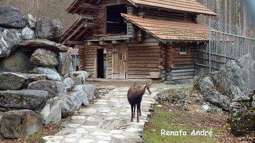 Animais do Alpenwildpark