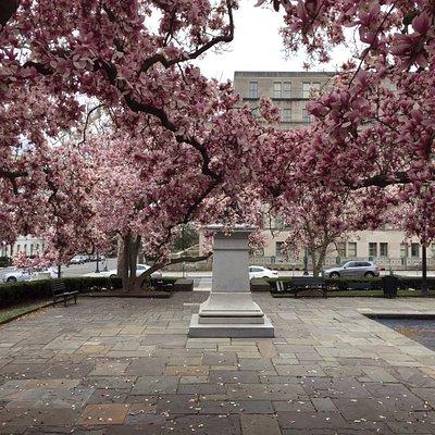Beautiful spring flowering trees this morning