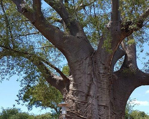 Boab Prison Tree, Kasane