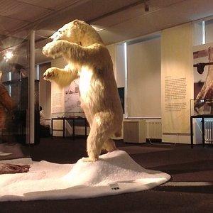Niedźwiedź Polarny i inne zwierzęta atrakcją wystawy