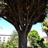 The Botanical Garden impression