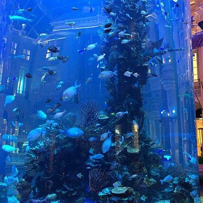 Aquarium at MGM Macau (5)