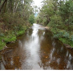 View of Ovens River from Cherry Walk Bridge