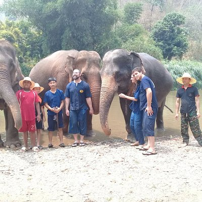 Elephant care experience