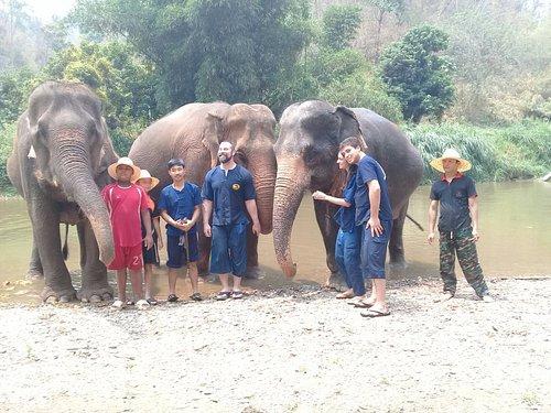 Elephant care experience