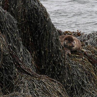 Mum and cub otter