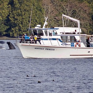 Our vessel alongside 2 Gray Whales