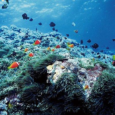 珊瑚礁保育區浮潛 Snorkeling in the coral reef conservation area
