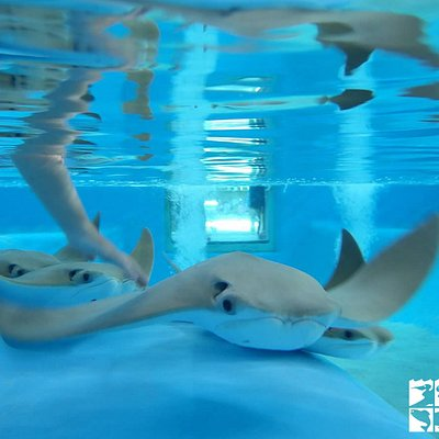 Our stingray feeding program is a must do when you visit the Coastal Center!