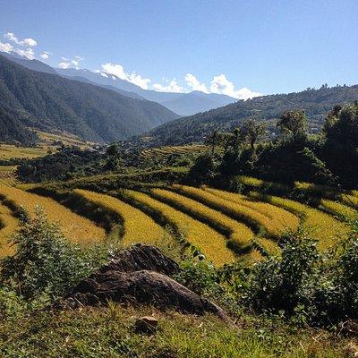 Punakha valley, Bhutan.